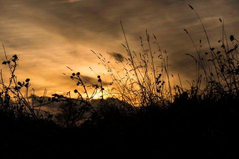 © Coppertone Photography